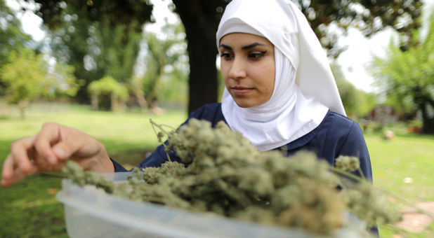 """California """"weed nun"""" India Delgado, who goes by the name Sister Eevee, carries hemp at Sisters of the Valley near Merced, California."""