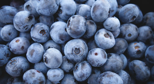 But this year, city officials told the devout Catholic family their blueberries and sweet corn were not welcome at the farmer's market—and neither were they.