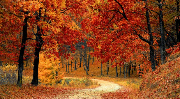 Here in the South, we're experiencing a gorgeous autumn season, with brisk temperatures and leaves of electric colors: fiery oranges and reds intermingled with fluorescent yellows.